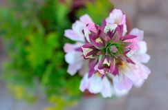 Witte bloemclose-up op een zonnige dag royalty-vrije stock afbeelding