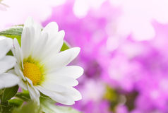 Witte bloemdetails Royalty-vrije Stock Foto