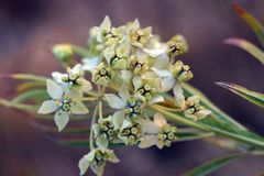 Witte bloemen stock fotografie
