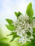 Witte bloemen. Royalty-vrije Stock Afbeeldingen