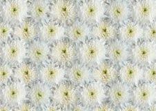 Witte bloemen. Royalty-vrije Stock Afbeelding