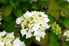 Witte bloemen Royalty-vrije Stock Afbeeldingen
