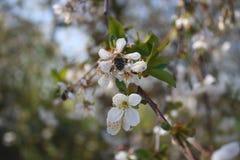 Witte bloemen Royalty-vrije Stock Fotografie