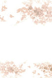 Witte bloemen als achtergrond Royalty-vrije Stock Foto's