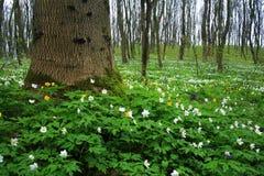 Witte bloemen in bos Royalty-vrije Stock Foto's