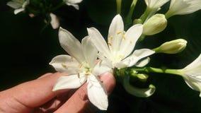 Witte bloemen in de tuin Stock Afbeelding