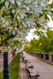 Witte Bloemen die een Toneelweg voeren royalty-vrije stock fotografie