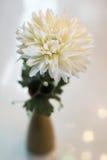 Witte bloemen in een vaas royalty-vrije stock foto