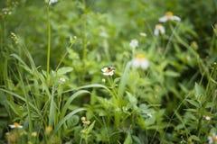 Witte bloemen en bij royalty-vrije stock foto's