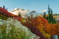 Witte Bloemen en Dalingskleuren voor Regenachtiger Onderstel royalty-vrije stock afbeelding