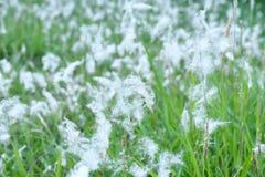 Witte bloemen en groen gras stock afbeeldingen