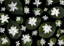 Witte bloemen en groene bladeren Stock Foto