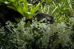 Witte bloemen en tropische installatiesbladeren Royalty-vrije Stock Afbeelding