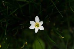 Witte bloemen en weide Stock Afbeelding