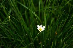 Witte bloemen en weide Stock Afbeeldingen