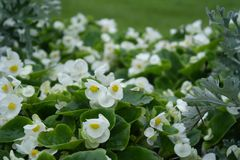 Witte bloemen in green stock afbeeldingen
