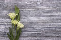 Witte bloemen grijze houten achtergrond Rood nam toe Huwelijk De kaart van de groet De dag van de vrouw 8 Maart Royalty-vrije Stock Afbeelding