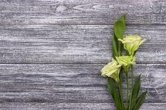 Witte bloemen grijze houten achtergrond Rood nam toe Huwelijk De kaart van de groet De dag van de vrouw 8 Maart Royalty-vrije Stock Afbeeldingen