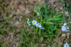 Witte Bloemen met Gele Centra royalty-vrije stock foto's