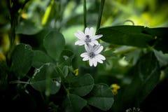 Witte bloemen met groene bladeren stock foto's