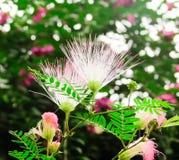 Witte bloemen na de regen Stock Foto