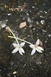 Witte bloemen op brickfloor Stock Foto's