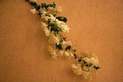 Witte bloemen op een muur Royalty-vrije Stock Afbeelding