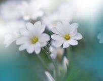 Witte bloemen op groene achtergrond Royalty-vrije Stock Foto's