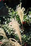 Witte bloemen op zonnige dag Stock Afbeeldingen