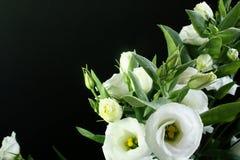 Witte bloemen op zwarte achtergrond Royalty-vrije Stock Foto's
