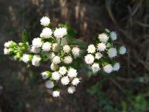 Witte bloemen in tuin royalty-vrije stock foto's