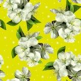 Witte bloemen van appel royalty-vrije stock foto's