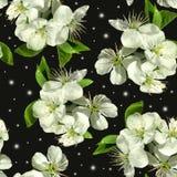 Witte bloemen van appel royalty-vrije stock foto