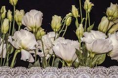Witte bloemen van Lisianthus met witte openwork geborduurde grens op zwart triplex stock foto's