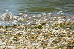 Witte bloemen in water Stock Afbeelding