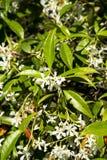 Witte bloemen in wildernis royalty-vrije stock foto