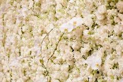 Witte bloemenachtergrond Royalty-vrije Stock Fotografie