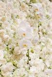 Witte bloemenachtergrond Royalty-vrije Stock Foto