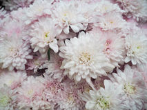 Witte bloemenachtergrond Stock Foto's
