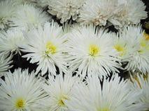 Witte bloemenachtergrond Royalty-vrije Stock Foto's