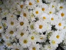 Witte bloemenachtergrond Royalty-vrije Stock Afbeelding