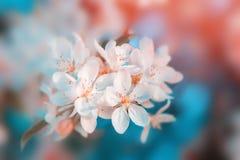 Witte bloemenbloesem Aard mooie bloemenachtergrond royalty-vrije stock foto