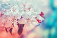 Witte bloemenbloesem Aard mooie bloemenachtergrond stock fotografie