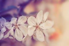 Witte bloemenbloesem Achtergrond van de aard de uitstekende pastelkleur stock foto