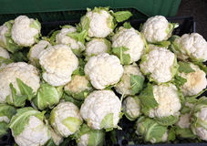 Witte bloemkolen voor verkoop in groentehandelaarsbox Royalty-vrije Stock Afbeeldingen