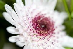 Witte bloemmacro royalty-vrije stock afbeeldingen