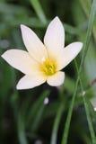 Witte bloemtuin Royalty-vrije Stock Fotografie