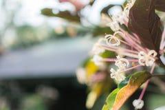 Witte bloemtuin Royalty-vrije Stock Foto's