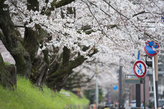 Witte bloemtuin in Japan Royalty-vrije Stock Foto's