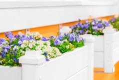 Witte bloemtuinen met mooie bloemen Stock Foto's